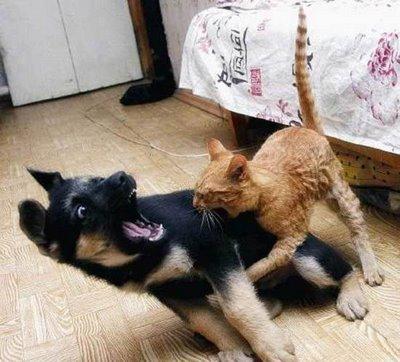 boabom cats
