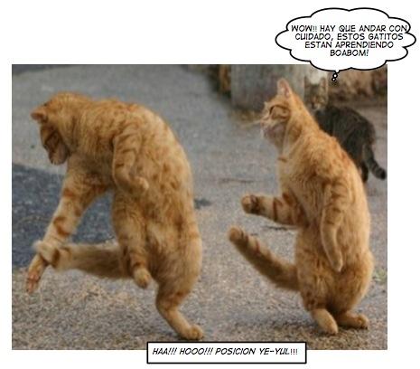 gatos boabom