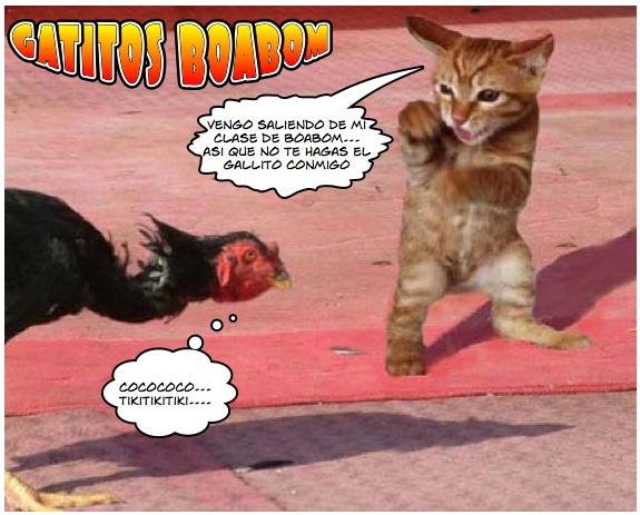 gatitos boabom